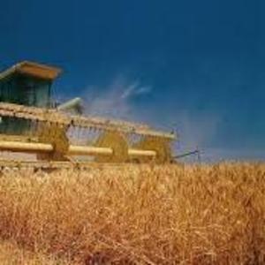 Продам зерно ячменя фуражного урожая 2015 года